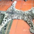 Man arrested in Issyk-Kul for 'accidentally' killing snow leopard